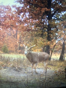 Archive Trail Cam Whitetail Photos